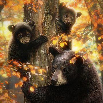 Black Bears by DavidPenfound