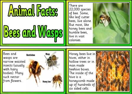 Free Animal Facts Cards About Bees And Wasps  Educational