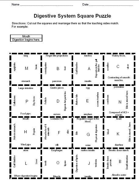 Digestive system worksheet 3rd 4th 5th grade   Third Grade ...