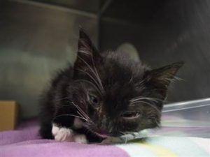 Carlos 22630 Adorable Kitten Vet Visits Kittens