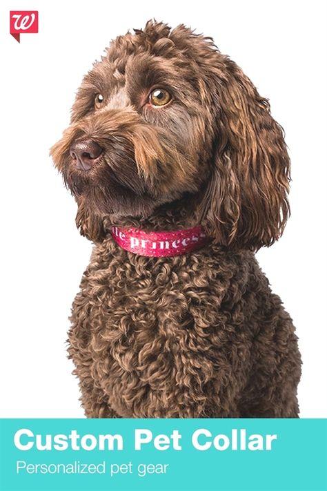 Dog Training Greensboro Dog Training Tips For Puppies Dog