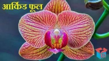 You Should Experience Orchid Flower Name In Hindi At Least Once In Your Lifetime And Heres Why Orchid Flower Na In 2020 Orchid Flower Plant Orchid Flower Flower Names