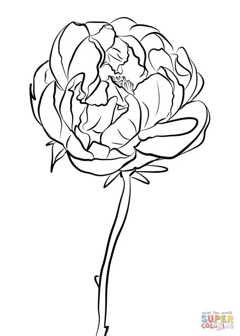 Peony Coloring Page From Peony Category Select From 26977