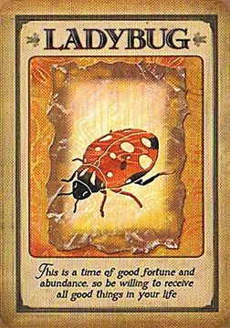 Messages from your animal spirit guides oracle cards | <3