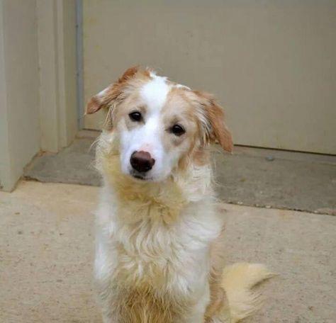 Allie Eastern Herding Dog Rescue Richmond Va Border Collie