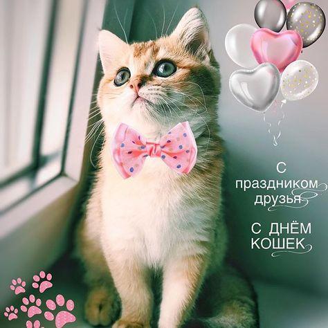 Сегодня Всемирный День кошек!  Поздравляю всех пушистиков с праздником!   Happy day cats...  Сегодня Всемирный День кошек!  Поздравляю всех пушистиков с праздником!   Happy day cats dear friends  #daycats #счастливыйкот #золотаяшиншилла #simba #британец #британскийкот #золотойкот #cat #goldcat #воронеж #Липецк #britishcat #simbalife22 #catsagram #britishgold #chinchilagold #kitten #kittens #instakitten #золотойбританец #золотойкот #insta_kitten #catloversclub #зеленыеглаза #chinchillacat #симба