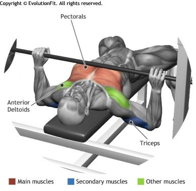 Best 25+ Bench Press Ideas On Pinterest | Bench Press Workout, Bench Press  Weights And Muscle
