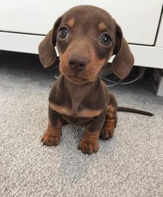 Winnie The Wiener On Instagram This Is My Pawrents Fave