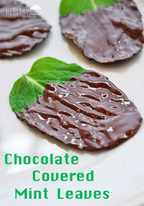 Chocolate Covered Mint Leaves   Healthy Recipes Blog