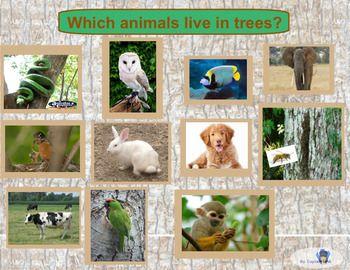 Which Animals Live In Trees Smartboard Interactive By Captain Lina In 2021 Interactive Activities Kindergarten Preparation Animal Habitats