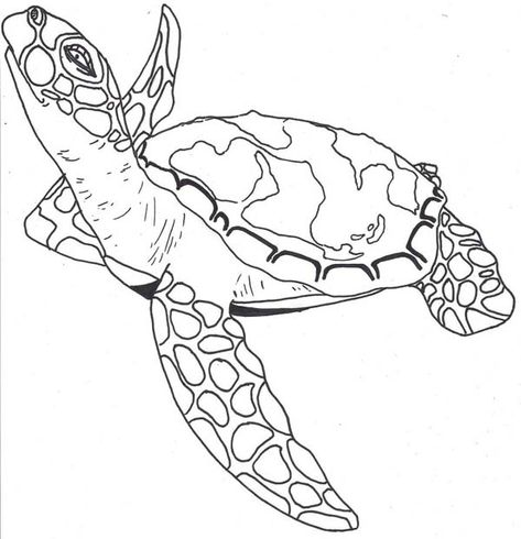 sea turtle facts free coloring page  download  print online coloring pages for free  color