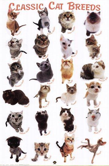 Yoneo Morita Cat Breeds