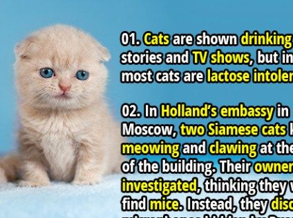 35 Interesting Facts About Cats Part 2 Cat Facts Fun Facts Cats