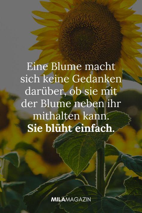 Eine Blume macht sich keine Gedanken darüber, ob sie mit der Blume neben ihr mithalten kann, Sie blüht einfach.  MILAMAGAZIN