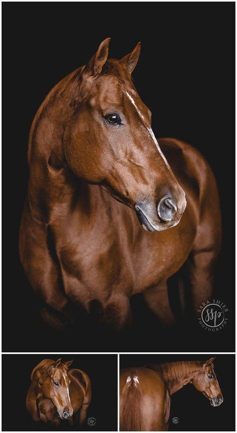 Susan + Bleu | Horse Spirit Ranch | Bonsall, California — Sara Shier Photography