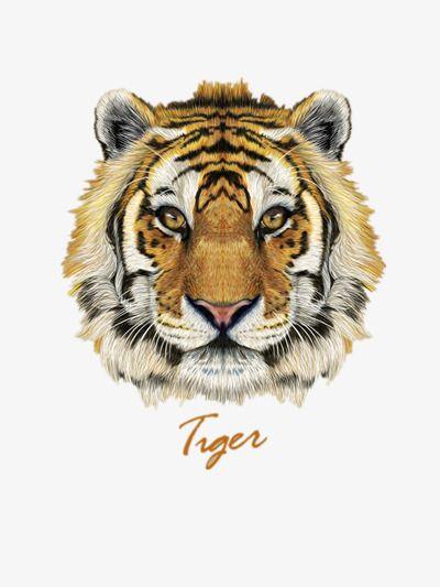 La Cara De Tigre Cara Nino Encantador Png Y Vector Para Descargar Gratis Pngtree Pet Tiger Tiger Face Animal Faces