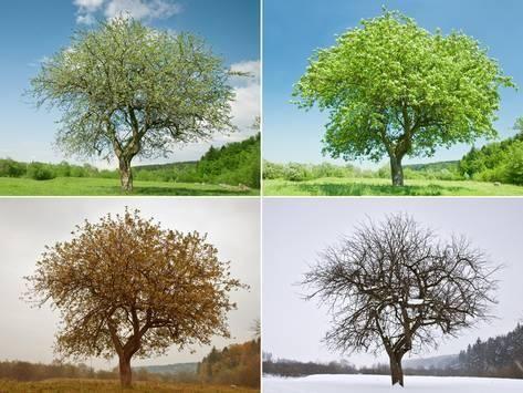 Alone Tree In For Season Photographic Print Mr Smith Art Com Four Seasons Seasons Photo Tree