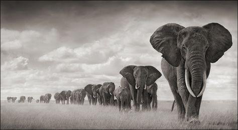 Africa [nickbrandtphotography]