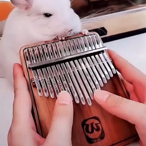 Thumb piano is like a magic music box that can produce amazing sound. It is a new type of instrument originated in Africa and super great for children to cultivate musical talent and for adults who simply love music.