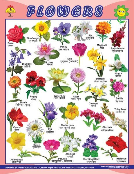 Name Some Flowers Name Google Search All Flowers Name Indian Flower Names Flower Images With Name