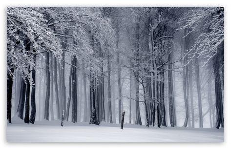 Snowy Forest Winter Hd Desktop Wallpaper Widescreen