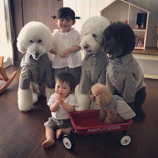 画像に含まれている可能性があるもの 1人以上 犬 ペット かわいい 犬 赤ちゃん 動画