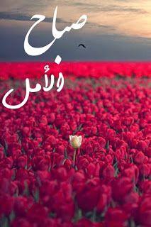 صورصباح الخير رومانسيه 2019 صور صباح الخير للحبيب Flower Quotes Good Morning My Love Sweet Words
