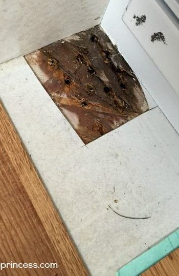 The Easy Guide To Fixing A Rotting Floor Flooring Fixes How To Fix Flooring Quick Ways To Fix Flooring How To Fix Are Diy Home Repair Diy Flooring Wood Diy