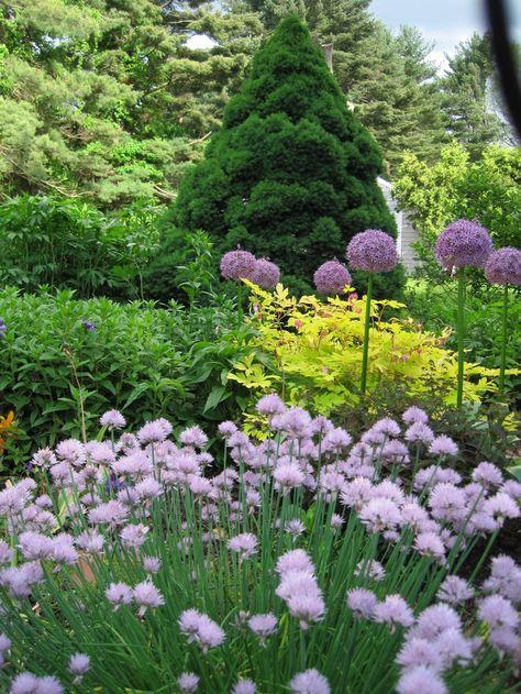 Perennial Gardens -
