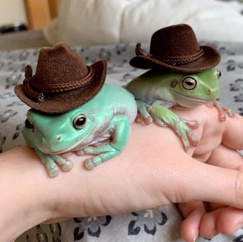 Jaques, Nanners and Tubby are all amphibians known as Dumpy tree frogs or White's tree frogs The Animals, Cute Little Animals, Baby Animals, Funny Animals, Frog Pictures, Animal Pictures, Frog Pics, Amphibians, Mammals
