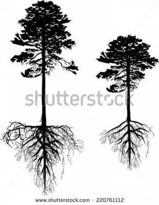 Tree Roots Tattoo Earth 62 Trendy Ideas Oak Tree Tattoo Roots Tattoo Pine Tree Tattoo