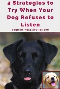 Pin On Dog Behavior