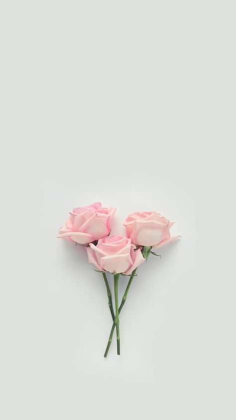 Flowers Background Wallpapers Pink Wall Papers 40 Ideas In 2020 Flower Background Wallpaper Pink Flowers Photography Floral Wallpaper Desktop
