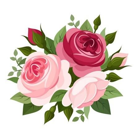 Red And Pink Roses Vector Illustration Vector Flowers Flower Art Rose Illustration
