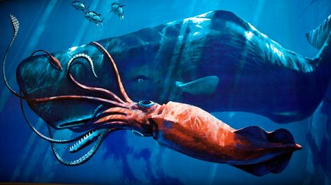 Giant squid vs whale