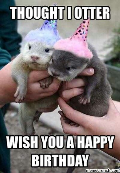 Thought I Otter Wish You A Happy Birthday Pictures Photos And Images For Facebook Tumblr Pint Happy Birthday Pictures Birthday Jokes Happy Birthday Animals