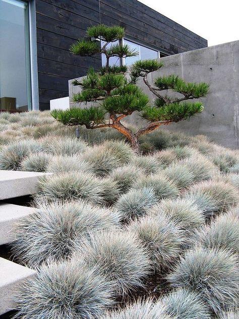 63 beautiful modern japanese garden landscape ideas 78 ideas of modern garden fence designs for summer ideas Modern Landscape Design, Modern Garden Design, Modern Landscaping, Contemporary Landscape, Landscape Architecture, Backyard Landscaping, Landscaping Ideas, Landscaping With Grasses, Modern Planting