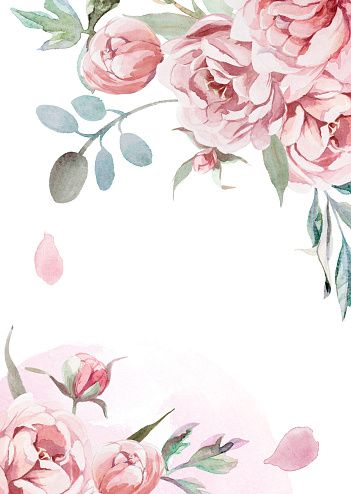 Watercolor Light Pink Rose Peonies With Gray Grass On White In 2020 Flower Background Wallpaper Pink Roses Background Watercolour Texture Background
