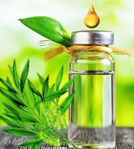 Teebaumöl ist durch seine antiseptische und antibakterielle Eigenschaften bekannt. Das ätherische Teebaumöl gegen #Schuppenflechte verursacht keine Nebenwirkungen und bringt fast immer gute Ergebnisse bei der #Psoriasis Behandlung. #psoeasy