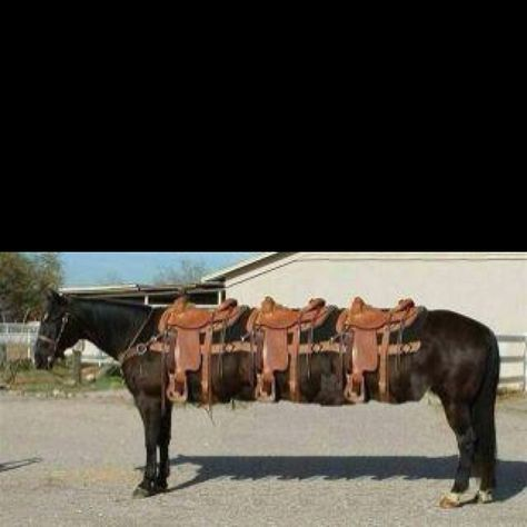 Horse Limo Style