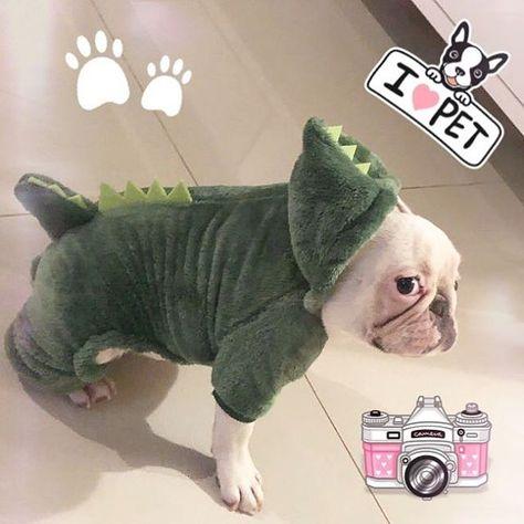 dogsofinstagram 🦖❤️🎀🐾...