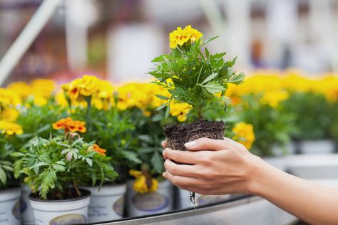Why a Local Garden Center Is the Best Place to Buy Plants