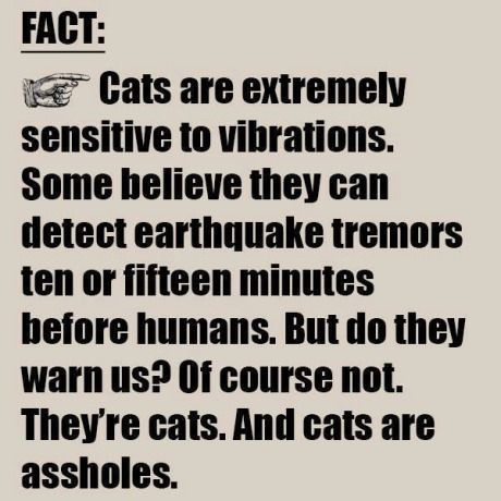Sorry cat lovers it just made me laugh out Loud  Fact about cats