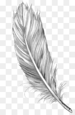 Free Download Drawing Feather Bird Art Sketch Feather Png 1050 1600 And 0 94 Mb Feather Drawing Bird Line Drawing Feather Sketch