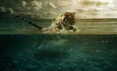 Free Baby Tiger Wallpaper High Quality With Images Tiger