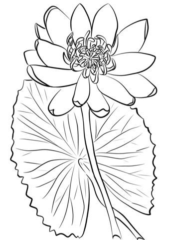 Click To See Printable Version Of Red Water Lily Coloring Page