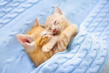 Baby Cat Ginger Kitten Sleeping Under Blanket Ad Ginger Cat Baby Blanket Sleeping Ad Baby Cats Sleeping Kitten Cat Cuddle
