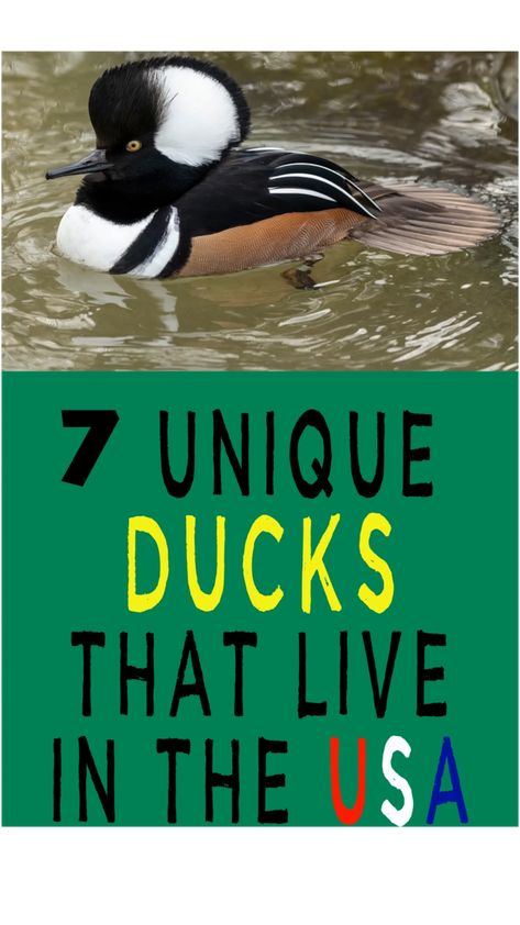 7 Unique Ducks That Live in the United States