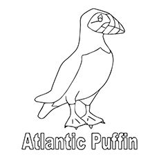 Top 10 Puffin Coloring Pages For Toddlers Bird Coloring Pages