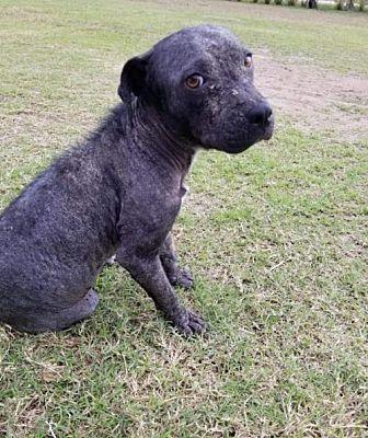 New York Ny Mixed Breed Medium Meet Starla A Dog For